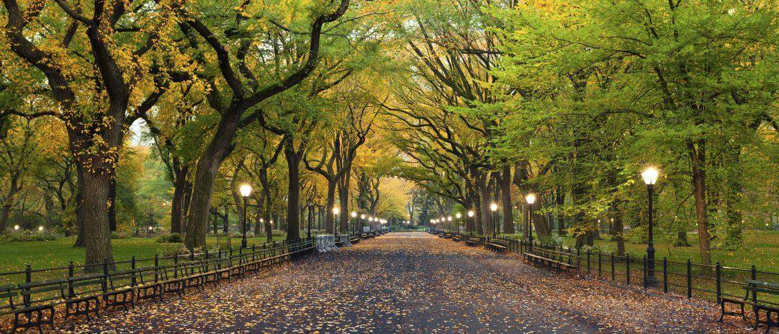 Ezra Cohen Montréal top parcs à visiter